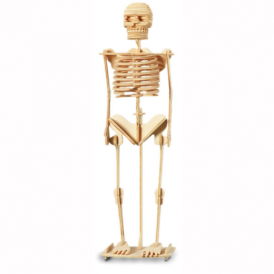 Woodcraft Construction Kit Large Skeleton