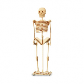 Woodcraft Construction Kit - Skeleton
